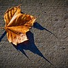 SRd1901_9391_Leaf_at300