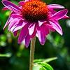 SRf2007_2816_Flower