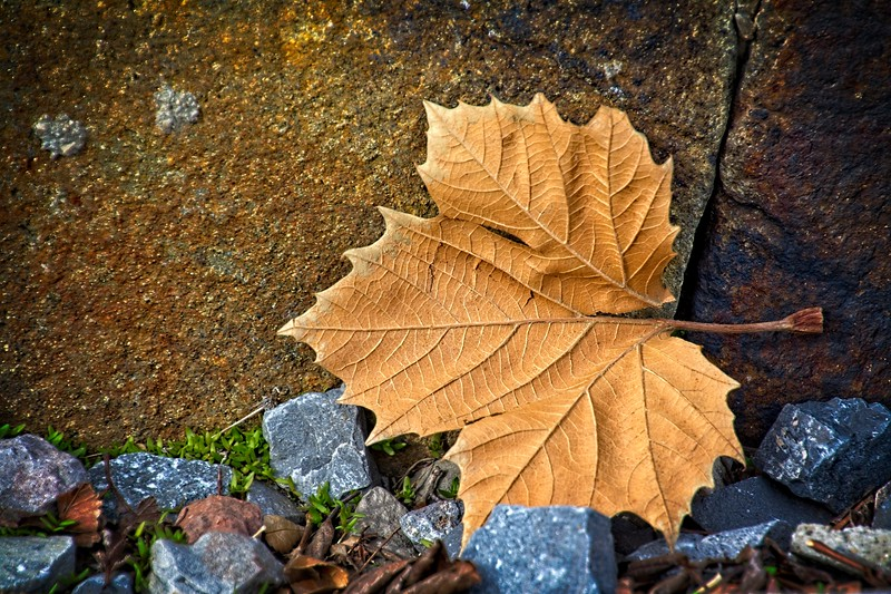 SRf2002_1921_Leaf