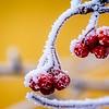 SRc1612_8688_Frost-Edit