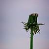 SRf2004_2166_Flower