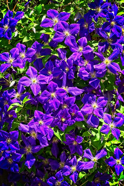 Purple flowers at the Tracy Aviary in Utah
