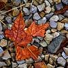 SRd1903_9525_Leaf
