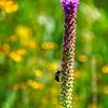 SRf2107_6266_FlowerBug