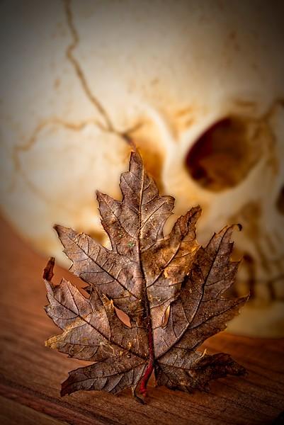 Skull and Leaf