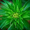 SRf2005_2232_Flower