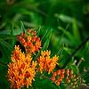 SRf2107_6267_Flower