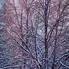 SRd1903_9562_TreeSnow