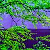 SRd1705_0022_Leaves
