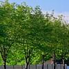 SRf1909_1251_Trees