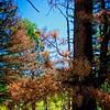 Trees near Panguitch Lake, Utah