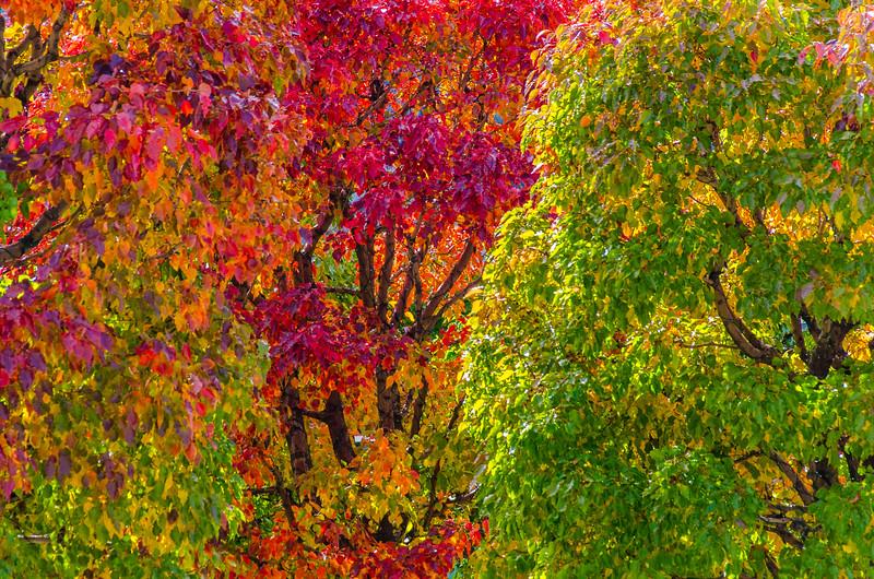 SRU1310_6904_Leaves