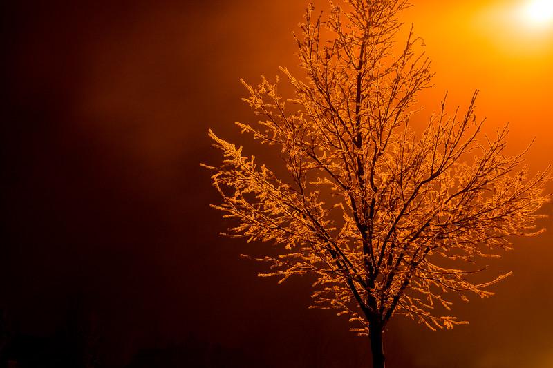 SRV1401_2218_Tree-Edit