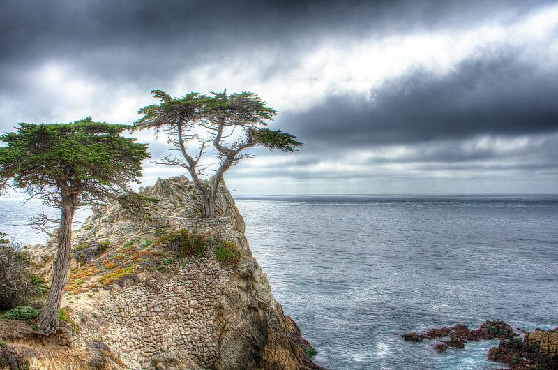 The Lone Cypress at Pebble Beach, CA