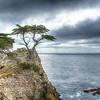 The Lone Cypress at Pebble Beach, CA