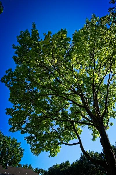 SRf2006_2349_Tree