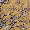 SRV1401_1947_Snow_Trees