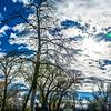 SRb1511_4147_Trees_at_Roots-Edit