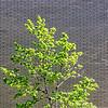 SRd1804_4696_Tree