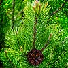 SRf2004_2142_Tree