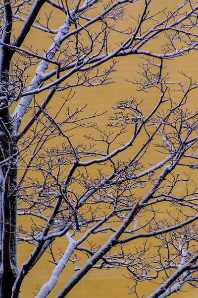 SRV1401_1950_Snow_Trees