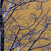 SRV1401_1950_Snow_Trees