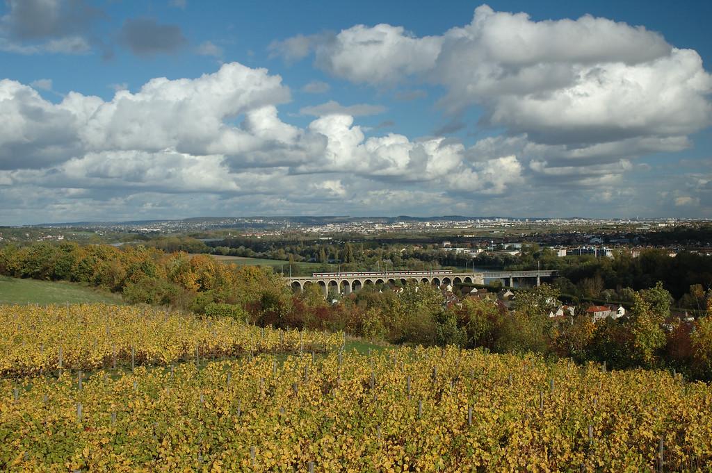Parc du chateau de Saint Germain. Les vignes.