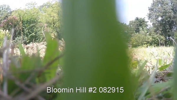 Bloomin Hill no2 082915