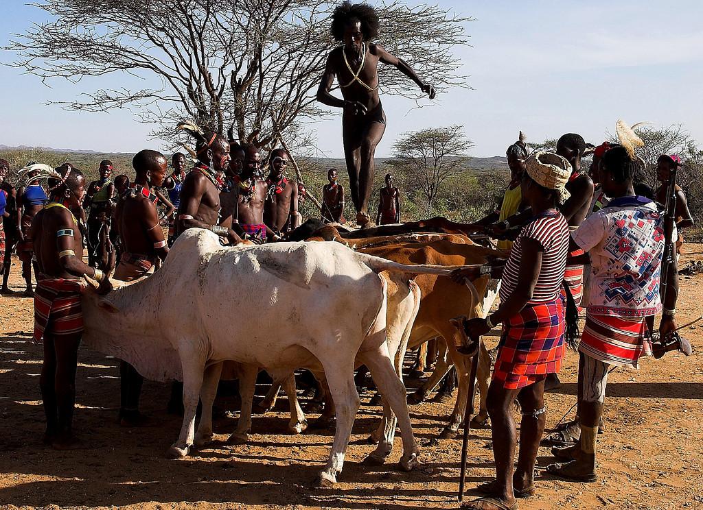 Bull jumping South Omo.