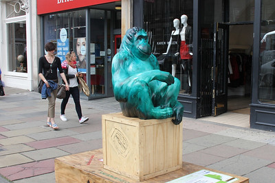 They have taken this too far.  A Chimp on George Street?   What next??