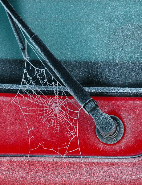 A frosty spider web