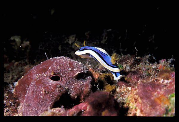 Red Sea nudi