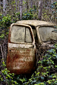 JIm Short's Truck: the carcass of an IH pickup, buried in blackberries.