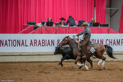 ArabianNatals2015-1564
