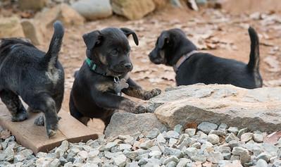RescuePups201510-1141