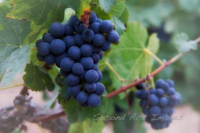 Vineyard II