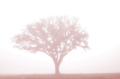 Oak Tree near beach in Long Beach.  I added a little red color, cause I had been seeing gray all morning.