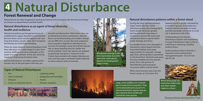 4 Natural Distrubance Final