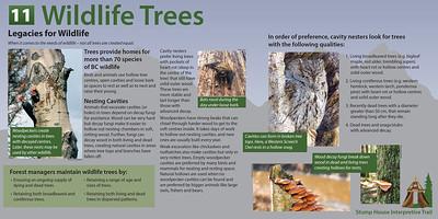 11 Wildlife Trees Final