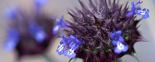 Macro Flower Bud