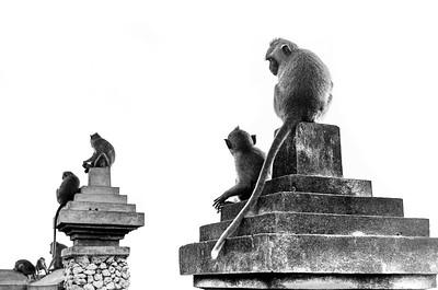 Uluwatu Monkeys