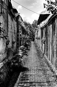 Jungle Alleyway