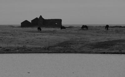 Hestakrútt við Búlandshöfða