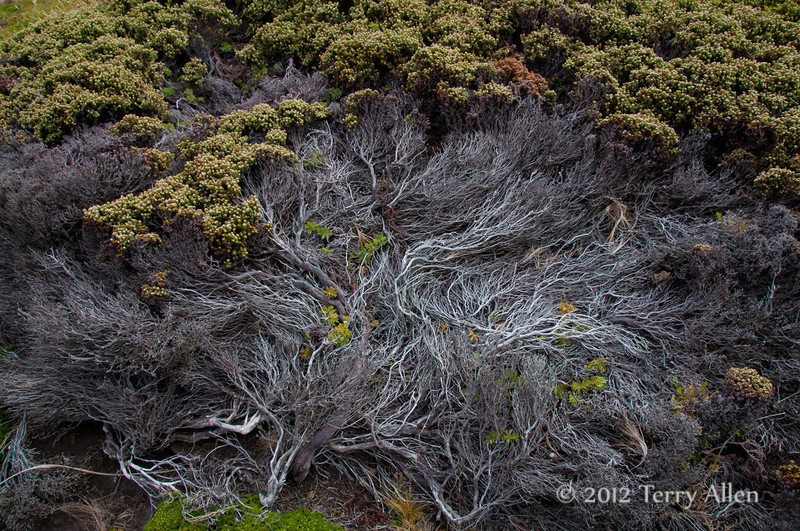 Ground-cover-2,-Carcass-Island,-Falkland-Islands