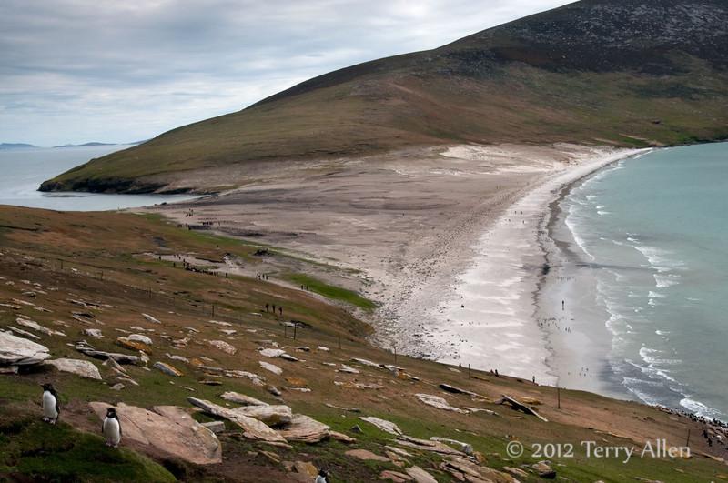 Sanders-Island-2,-Falkland-Islands