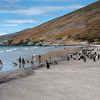 Walk-on-beach,-Sanders-Island,-Falkland-Islands