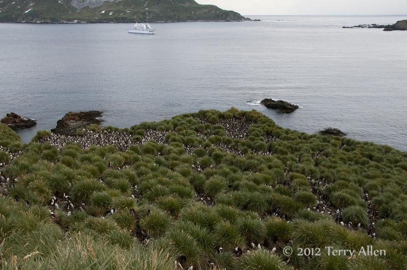 Macaroni-penguin-colony-&-Le-Diamant,-Cooper-Island,-South-Georgia-Island