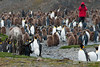 Reindeer-&-king penguins-3,-Fortuna-Bay,-South-Georgia-Island