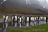 King-penguins-in-stream-4,-Fortuna-Bay,-South-Georgia-Island