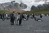 King-penguins-&-glacier,-Gold Harbour,-South-Georgia-Island